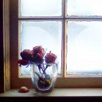 Window Roses